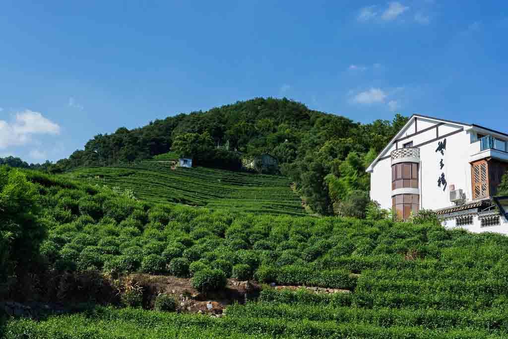Piantagione di tè ad hangzhou